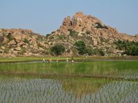 Rice paddy and granite mountain in Hampi, India.