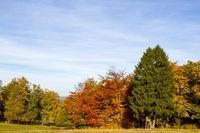 Baumgruppe im Herbstgewand