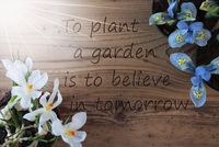 Sunny Crocus And Hyacinth, Quote Plant Garden Believe In Tomorrow