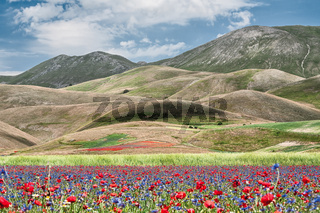 Castelluccio during the flowering
