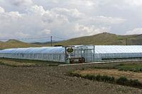 Folientunnel für den Hors-Sol-Anbau von Erdbeeren