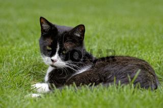 Junge Katze im Garten
