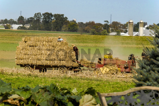 Amish Family Harvesting the Fields on an Autumn Day pt 2