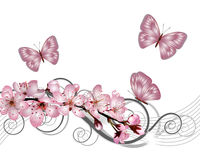 Blossoming sakura cherry branch with pink flowers