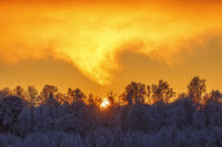 Sunset over a forest with frost and snow in winter