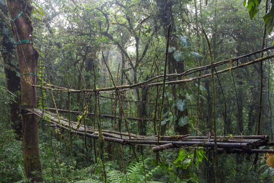 This bamboo bridge might be dangerous