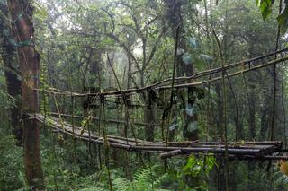This bamboo bridge might be dangerous