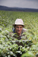 farmer in the fields