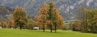 Colorful trees and green meadow.