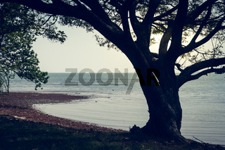 Single tree on the shore of a lake