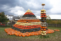 Autumn harvested pumpkins arranged for fun like pyramid