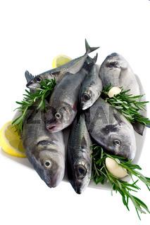 Rohe Speisefische - raw fish -