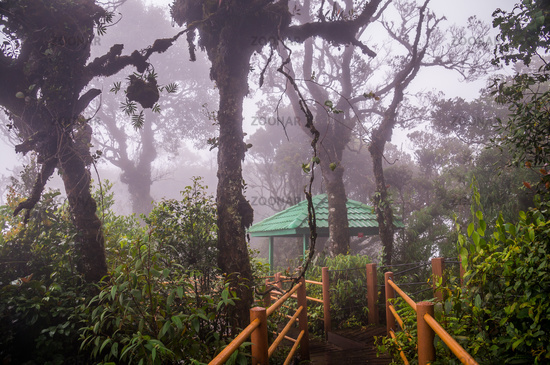 Boardwalk through misty Mossy Forest in Cameron Highlands