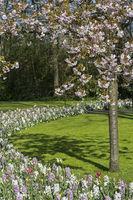 Frühlingsblumenarrangement in der Blumengartenschau Keukenhof, Lisse, Niederlande
