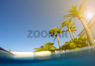 swimming pool, palm trees and sunny blue sky