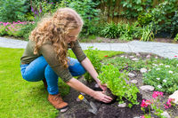 Dutch teenage girl planting parsley in garden soil