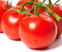 Ripe wet tomato with water drops