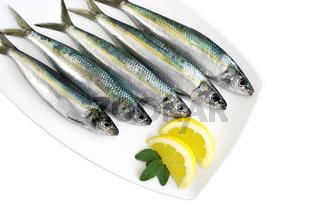 Sardinen-Teller - sardina pilchardus