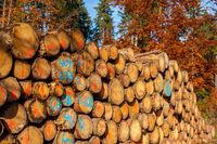 Holzpolter nachwachsender Rohstoff Holz