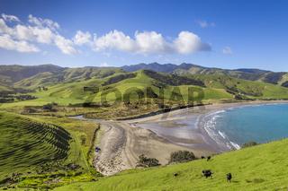 Coromandel Port Jackson New Zealand