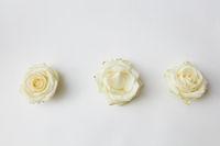 three white rosebuds