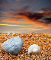 Two seashells on sand beach