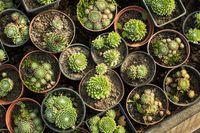 The Succulents sale