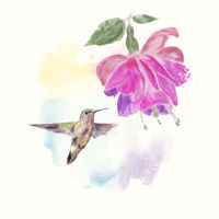 Hummingbird and fuchsia Flower watercolor