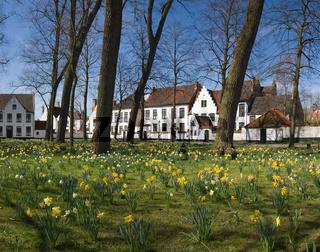 Flowers lawn in Brugge