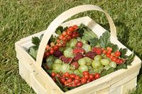 Gartenfruechte im Korb