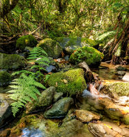 A Small Stream in the Mountains of California