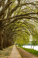 Trees along the river side in Ponte de Lima