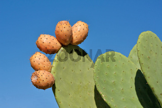 Prickly Pears Against Blue Sky