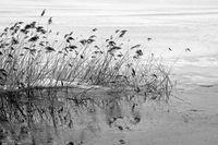 Impressionen vom winterlichen See