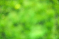Blur background dream bokeh leaf sunny day background concept for modern eco spring banner decoration christian card. fresh bio green texture. A juicy green background for spring or summer