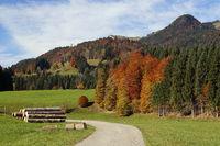 Holzstapel in Herbstlandschaft