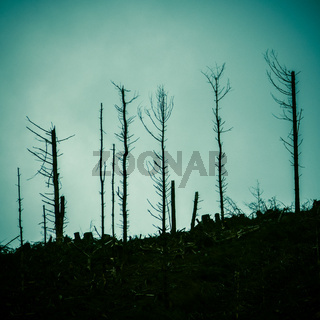 Dead Forest After A Fire