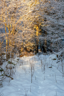 Trail through the woods in winter