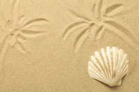 Palm Trees Drawn in the Sand. Summer Background with Shell