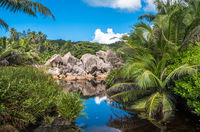 Lake in the jungle, La Digue island, Seychelles