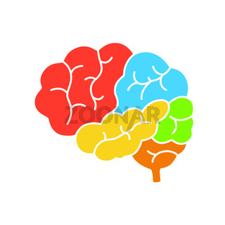 A diagram of the human brain side view, anatomy. Vector illustration in flat design style