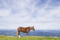 Pferdesommer auf dem Hörnle