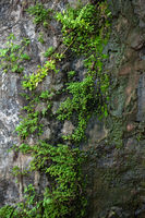 Gray wet stone covered with moss and green plants