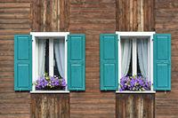 Zwei Fenster mit grünen Fensterläden, Gardinen und Blumen auf dem Fensterstock, Saas-Fee,Schweiz