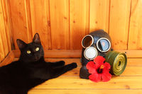 Black cat, red hibiscus flower and black gas mask on a wooden background.