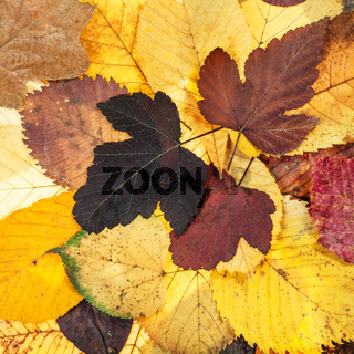 top view of natural autumn various fallen leaves