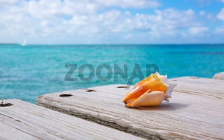 Sea shell on wooden background.