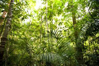 Rainforest landscape Malaysia