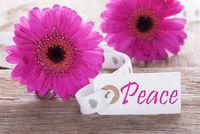 Pink Spring Gerbera, Label, Text Peace