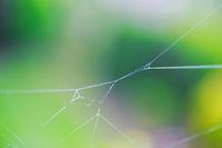 Freischwebende Spinnweben